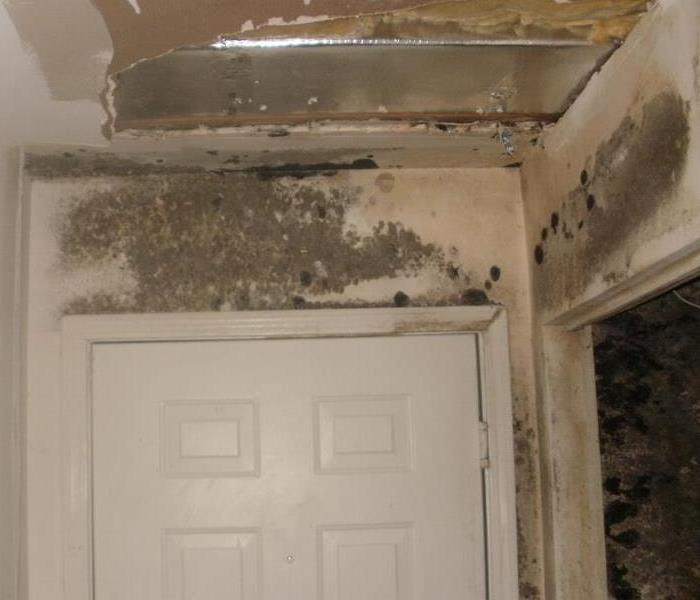 Ideal Moisture Conditions for Mold Growth